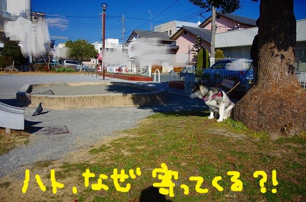 IMGP9652.jpg