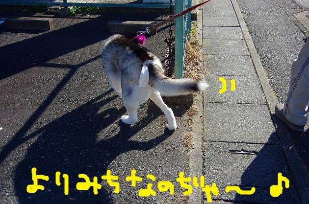 IMGP9664.jpg