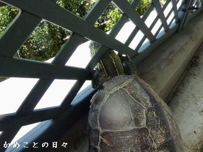 P1510369-suke.jpg
