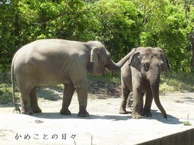 P1520166-zoo1.jpg