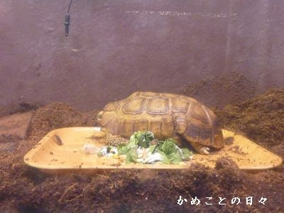 P1520256-zoo5.jpg