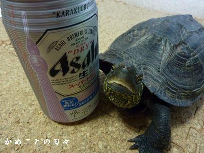 P1540701-beer.jpg