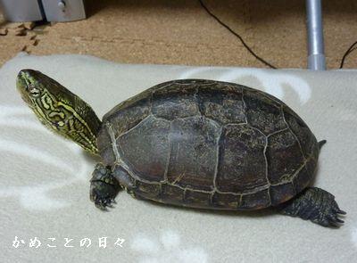 P1550596-suke.jpg