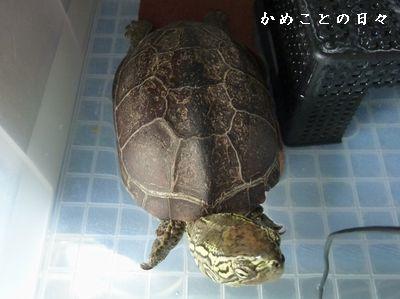 P1560662-1suke.jpg