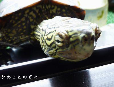 P1560671-1suke.jpg