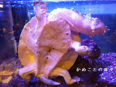 P1560959-zoo6.jpg