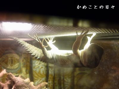 P1570022-zoo9.jpg