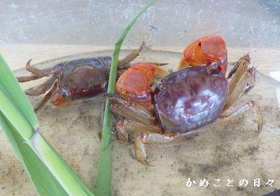 P1570206-kai.jpg