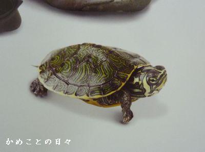 P1570213-kame.jpg