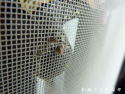 P1580725-suke.jpg