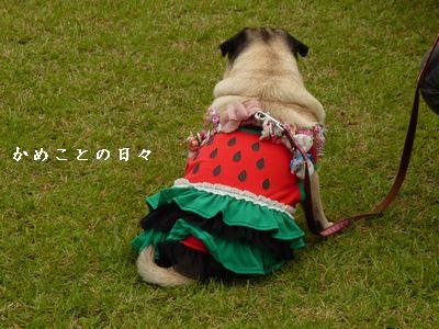 P1580933-dog.jpg