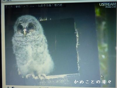 P1590196-owl.jpg