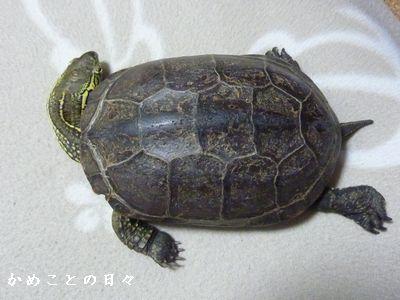 P1590314-suke.jpg