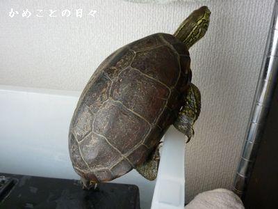 P1590361-suke.jpg