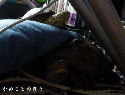 P1600349-sukeco.jpg
