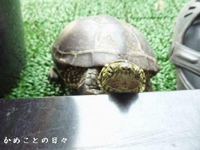 P1620185-suke.jpg