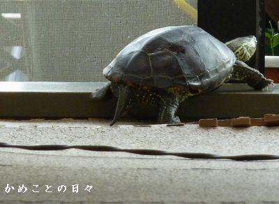 P1620463-suke.jpg