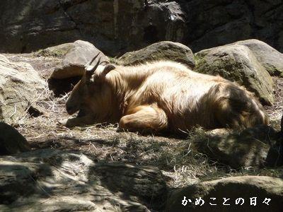 P1620550-zoo2.jpg