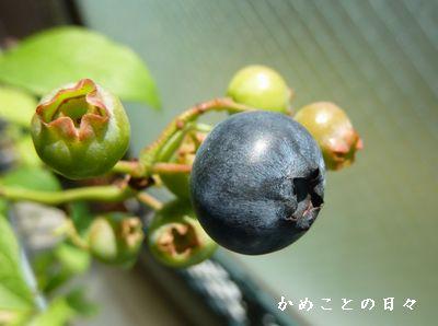 P1620569-berry.jpg