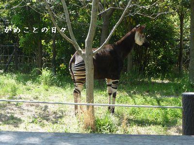 P1620587-zoo7.jpg
