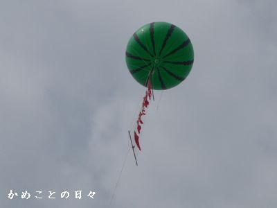 P1620881-suika.jpg