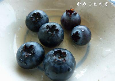 P1630842-blue.jpg