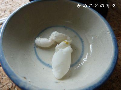 P1640428-egg.jpg