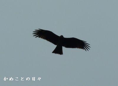 P1640922-tobi.jpg