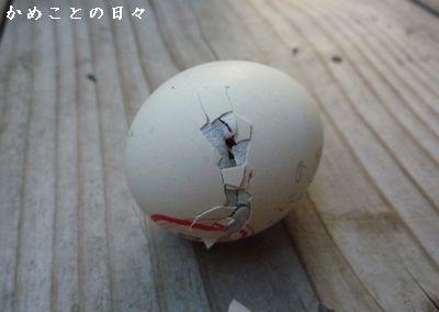 P1660254-egg.jpg