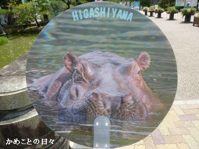 P1660863-uchiwa.jpg