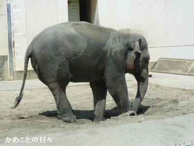 P1660888-elephant.jpg