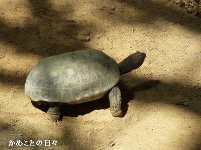 P1660984-akaashi.jpg