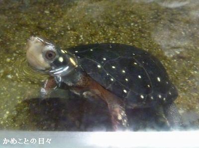 P1670036-kiboshi.jpg