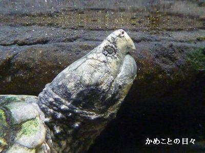 P1670074-wanigame.jpg