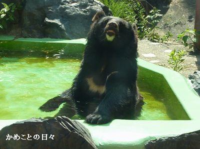 P1670222-bear.jpg