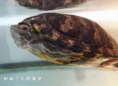 P1670285-dai.jpg