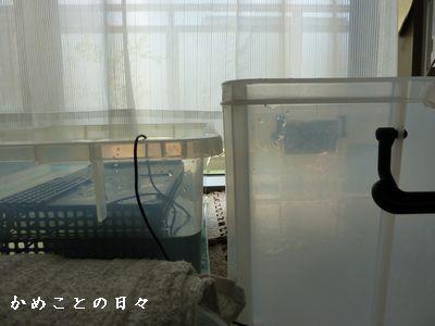 P1680267-box.jpg