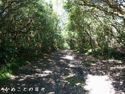 P1700014-green.jpg