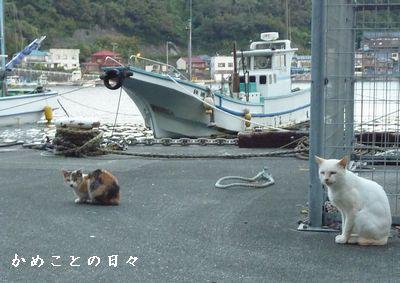 P1700241-cat.jpg