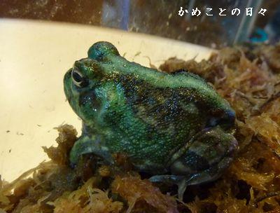 P1700403-frog.jpg