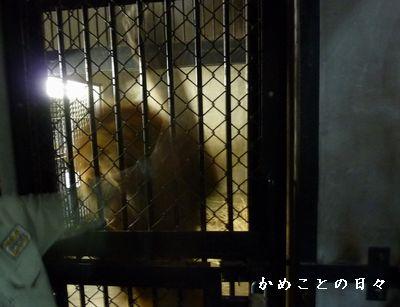 P1700957-lion.jpg