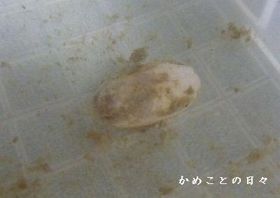 P1710089-egg.jpg