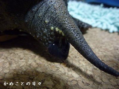 P1710248-haisetsu.jpg