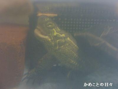 P1710921-co.jpg