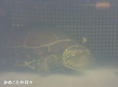 P1710964-suke.jpg