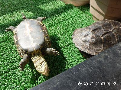 P1720127-suke.jpg