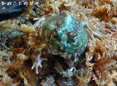 P1720464-frog.jpg