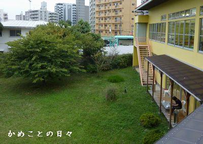 P1740954-niwa.jpg