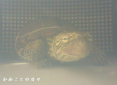 P1750144-suke.jpg