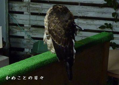 P1750260-ryu.jpg